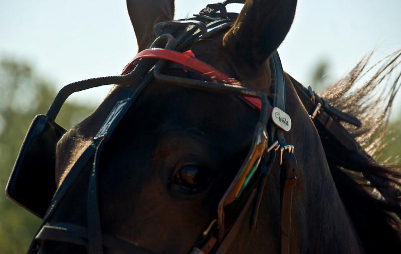 Eyeof a horse_6