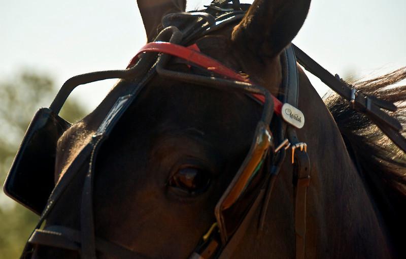 Eyeof a horse_7