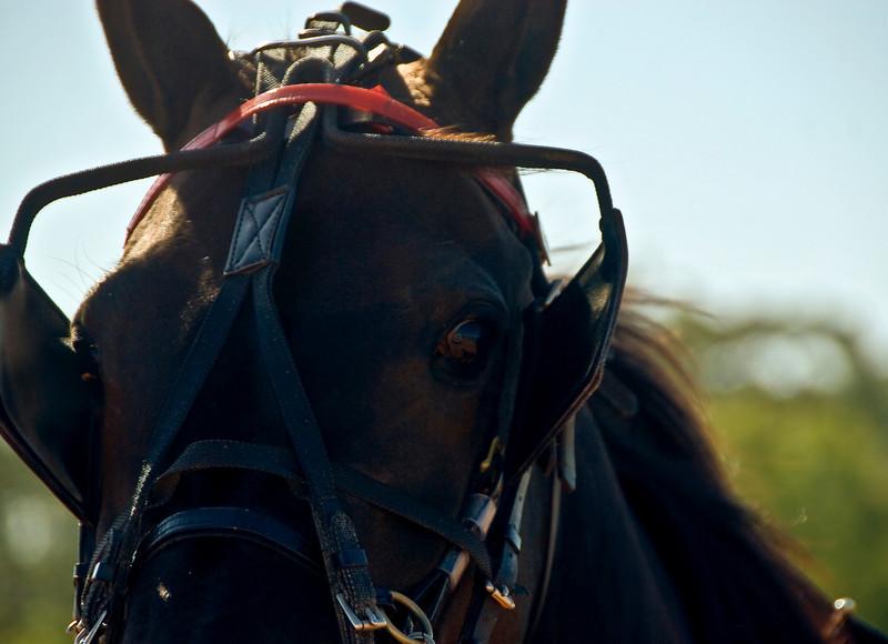 Eyeof a horse_3