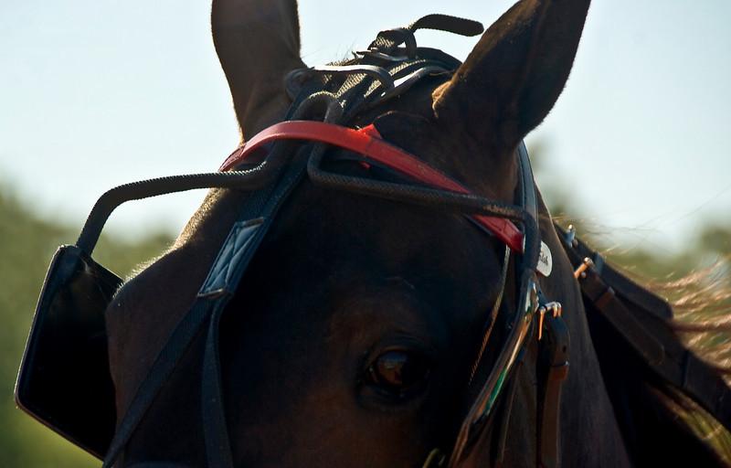 Eyeof a horse_5