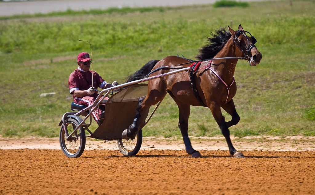 Whata Hustler<br /> Training by Kelly O'Donnell Stables<br /> Trainer: Kelly O'donnell