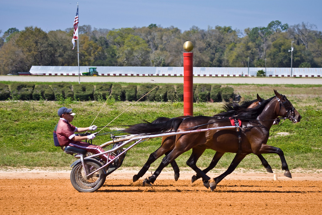 N. F. Quotable<br /> Training by Kelly ODonnell Stables<br /> Trainer:Keith Kammon<br /> Con Man Hanover<br /> Trainer:Leroy Stults
