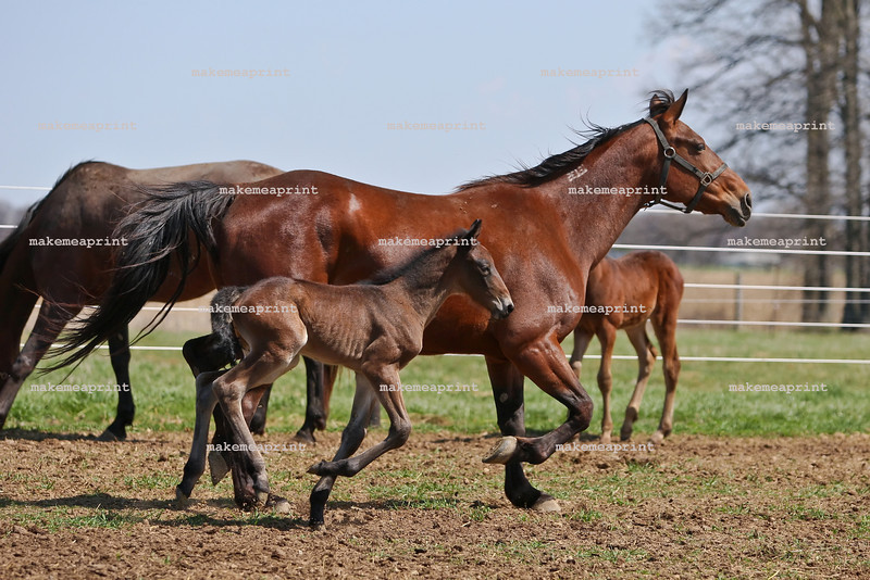 Filly from Here Comes Herbie and Daylonmission