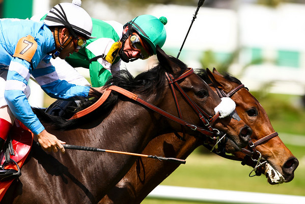 LeCaire (Cozzene), with Robby Albarado on the inside, holds off Athena's Gift (Fusiachi Pegasus) and Shaun Bridgmohan, in a Maiden at Fairgrounds. 3.08.2008