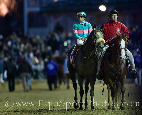 Zenyatta, Mike Smith up, returns after the Breeders' Cup Classic (G1) at Churchill Downs 11.06.2010ae