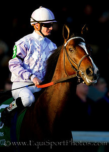 Al Khali (Medaglia d'Oro), Julien Leparoux up, before the Breeder's Cup Turf at Churchill Downs 11.06.2010ae