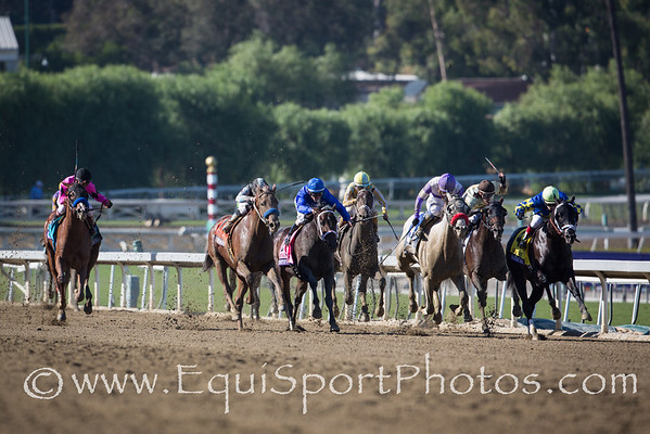 The field making a drive for the finish in the Breeders' Cup Juvenile