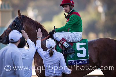 Animal Kingdom and Rafael Bejarano are greeted by the Herringswell handlers, Alice Clapham and Memo.  He was brilliant in his run in the Breeders Cup Turf to come in 2nd after being off for over 200 days.