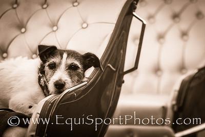 The carriage dog at Santa Anita Park.