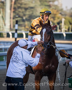 Wise Dan (Wiseman's Ferry) wins the Breeders' Cup Mile in track record time at Santa Anita on 11.3.2012. Johnny Velazquez up, Charles Lopresti trainer, Morton Fink owner.