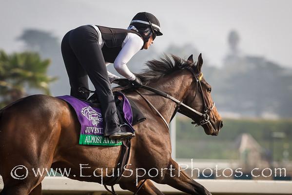 Almost an Angel at Santa Anita 11.01.2012