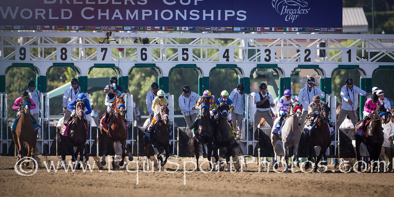 The start of the Breeders' Cup Juvenile at Santa Anita on 11.3.2012.  Shanghai Bobby bumps hard into Monument when he came out of the gate.