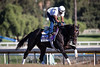 Golden Ticket gallops on at Santa Anita in preparation for the BC Dirt Mile. 10.31.13.