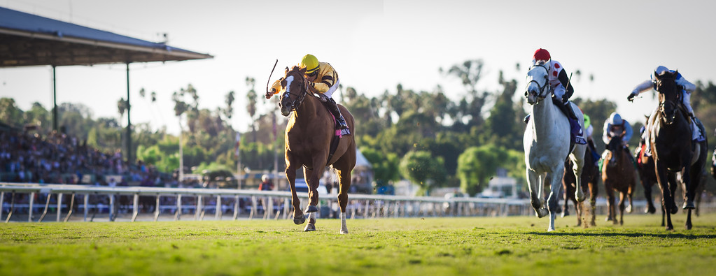 Wise Dan (Wiseman's Ferry) wins the Breeders' Cup Mile at Santa Anita on 11.2.2013. Jose Lezcano up, Charles Lopresti trainer, Morton Fink owner.