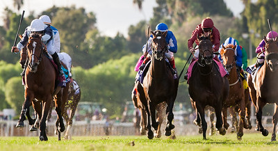 Karakontie (left, Bernstein) wins The Breeders' Cup Mile at Santa Anita on 11.1.2014. Stephane Pasquier up, Jonathan Pease trainer, Flaxman Holdings owner.