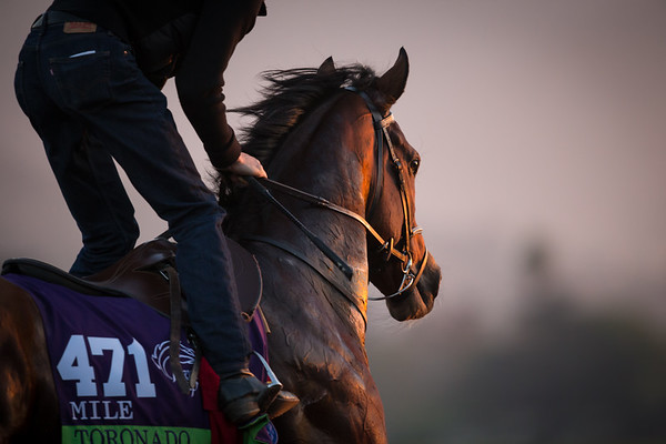 toronado gallops at Santa Anita on 10.30.14