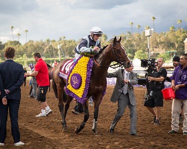 Karakontie (Bernstein) wins The Breeders' Cup Mile at Santa Anita on 11.1.2014. Stephane Pasquier up, Jonathan Pease trainer, Flaxman Holdings owner.