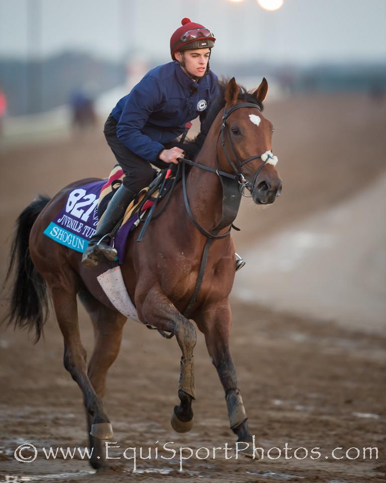Shogun gallops on Keeneland's main track on 10.29.2015