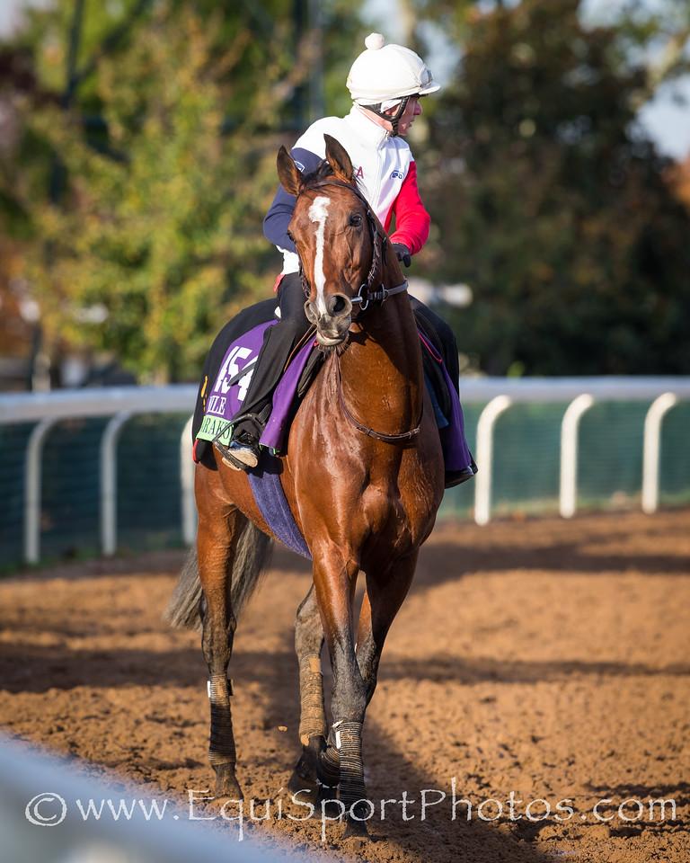 Karakontie gallops at Keeneland 11.29.15.