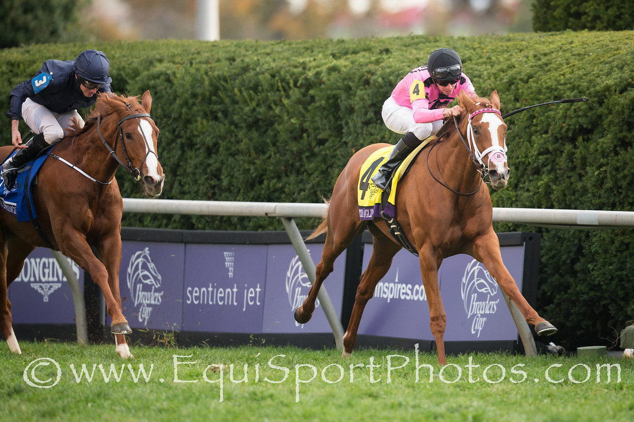 Catch a Glimpse (City Zip) wins The Breeders' Cup Juvenile Fillies Turf. Florent Geroux up, Mark Casse trainer, Gary Barer, Michael Jame Ambler and Windways owners.