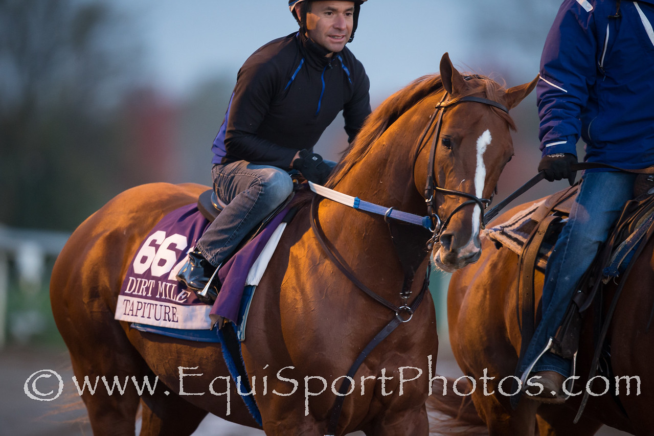 Tapiture on Keeneland's main track on 10.29.2015