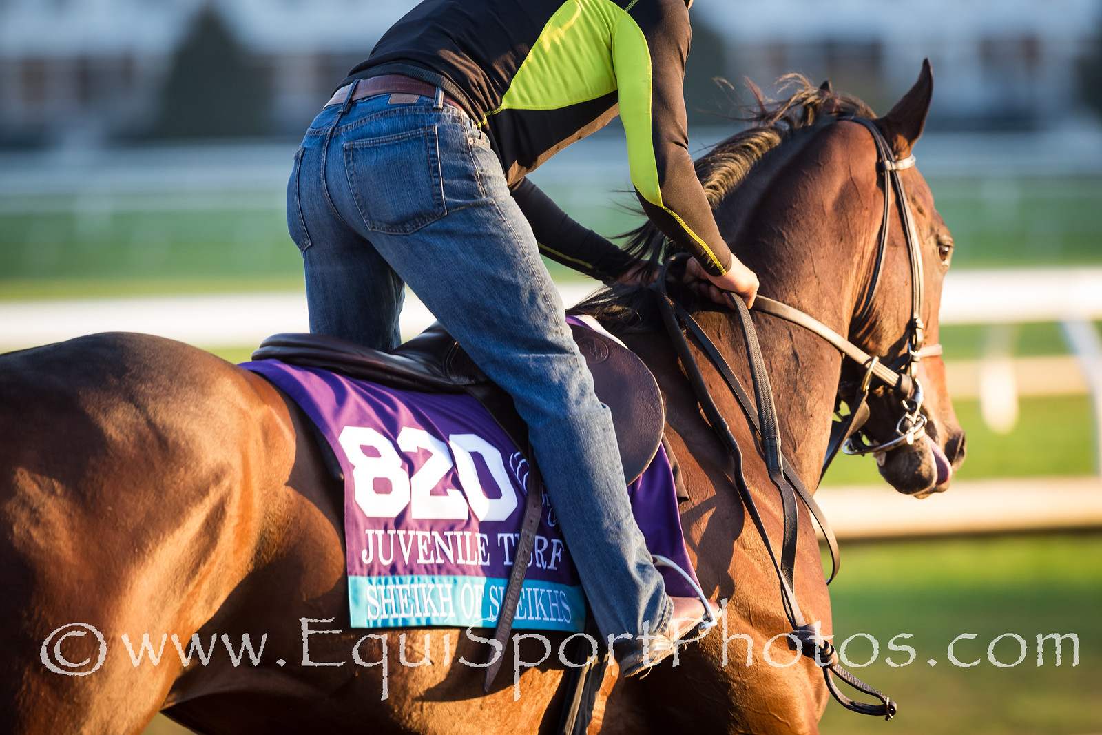 Sheikh of Sheikhs at Keeneland 10.23.15.