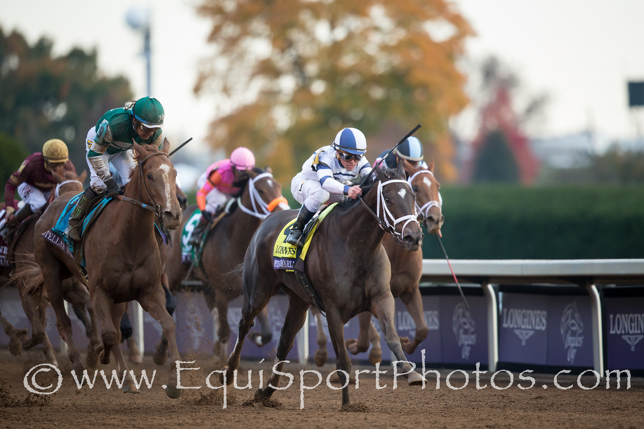 Stopchargingmaria (Tale of the Cat) wins The Breeders' Cup Distaff. Javier Castellano up, Todd Pletcher trainer, Town & Country Farms owner.