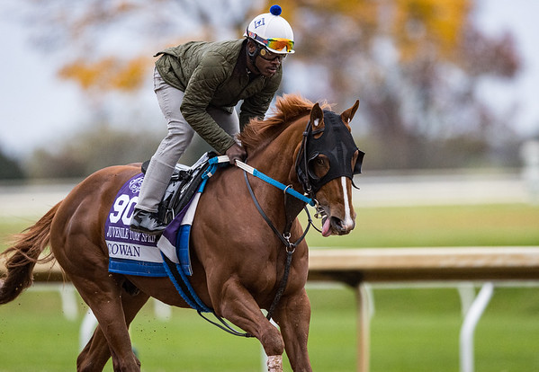 Cowan, trained Steven M. Asmussen, exercises in preparation for the Breeders' Cup Juvenile Turf Sprint at Keeneland 10.30.20.