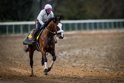 Tiz The Law, trained by trainer Barclay Tagg, exercises in preparation for the Breeders' Cup Classic 10.30.20