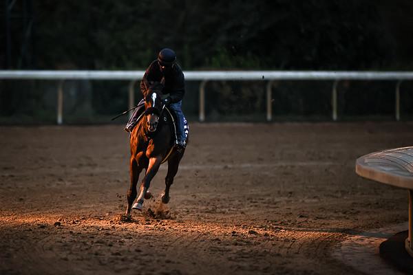 HORSE RACING 2020: Breeders Cup Preparations OCT 31