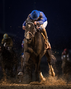 Imperia (Medaglia d'Oro), Robby Albarado uo, runs 2nd in the Ky. Jockey Club at Churchill 11.29.14. Trainer: Kiaran McLaughlin, Owner: Godolphin Racing.