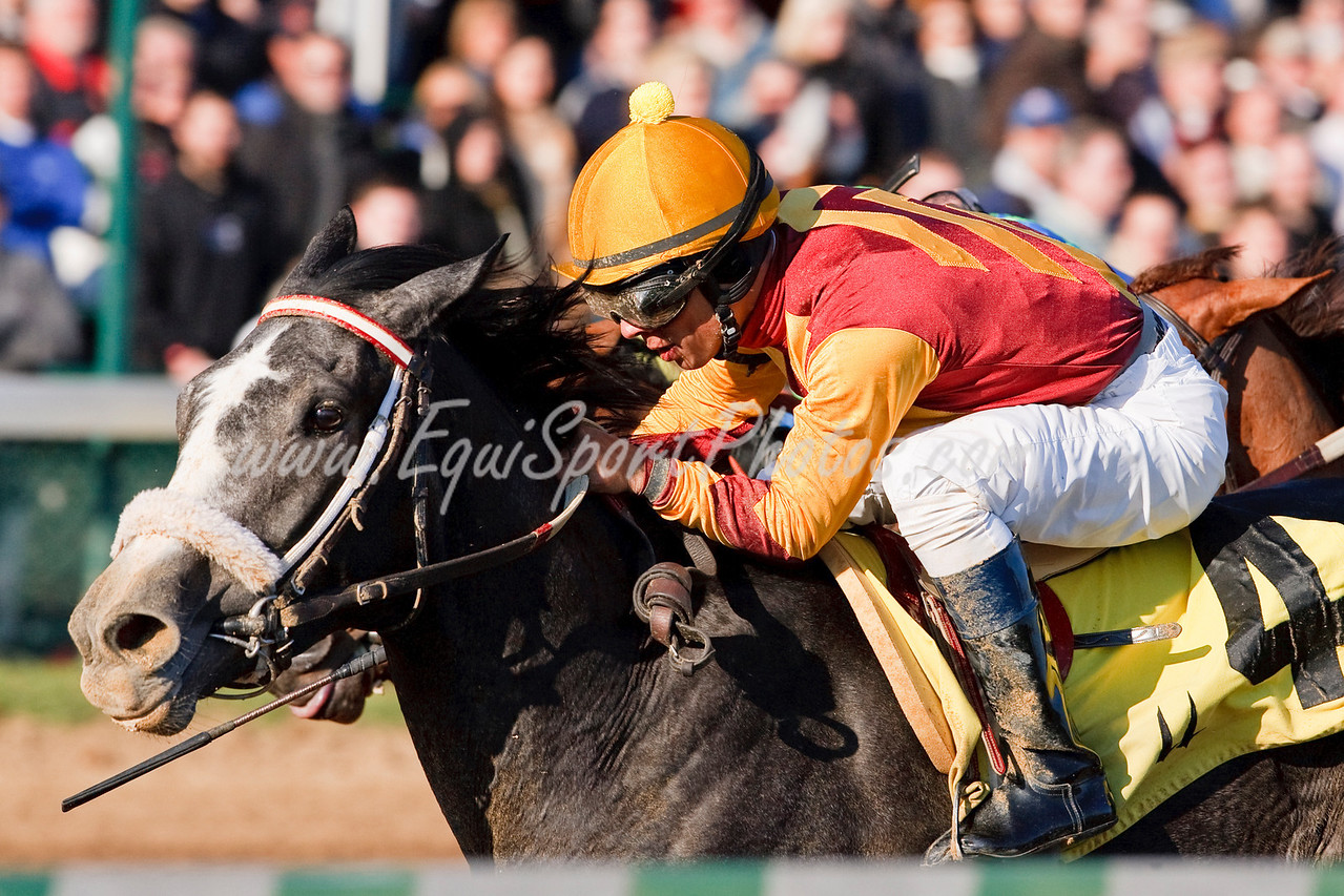 Patti's Regal Song (Unbridled's Song), Israel Ocampo up, wins a Maiden at Churchill Downs 11.27.2009mw