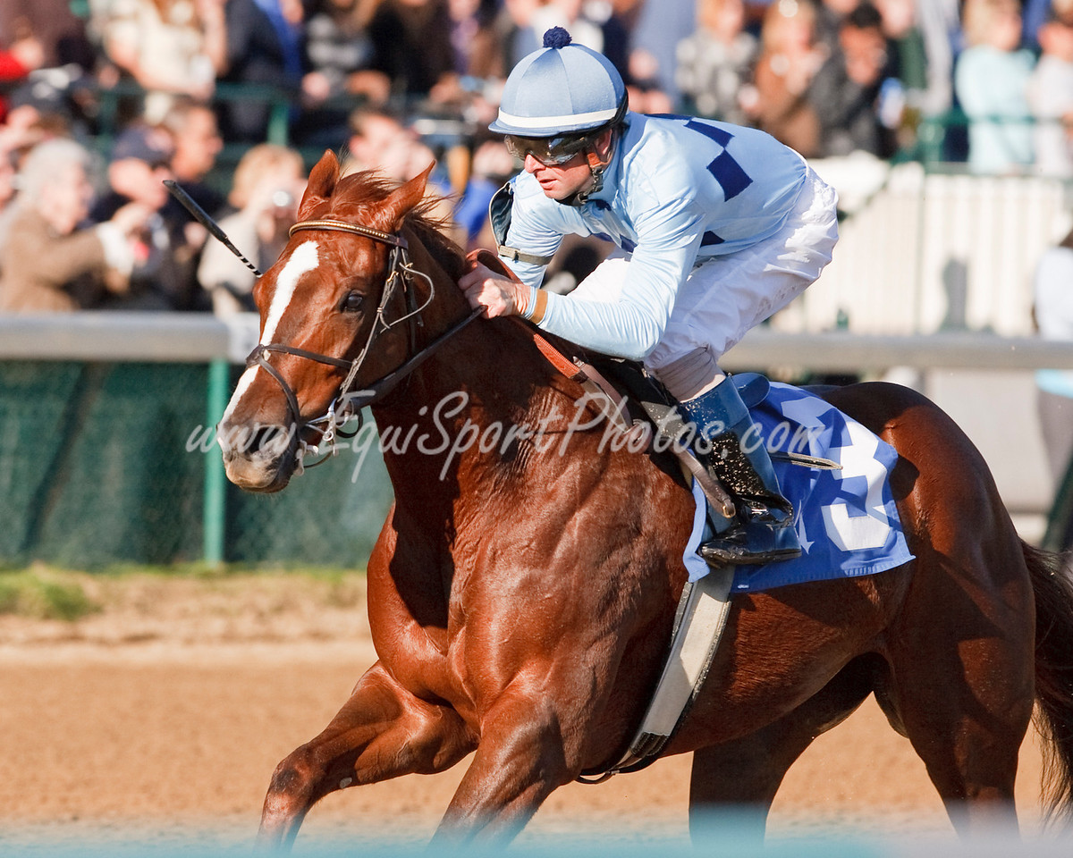 Autumn Eyes (Stormy Atlantic), Corey Lanerie up, wins a Maiden race at Churchill Downs 11.01.2009mw