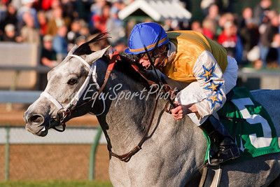Sheer Beauty (Mizzen Mast), Calvin Borel up, wins an Overnight Stakes at Churchill Downs 11.28.2009mw