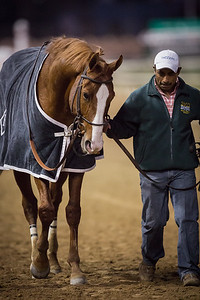 Shackleford (Forestry) wins the Clark Handicap at Churchill Downs on 11.23.12. Jesus Castanon up, Dale Romans trainer, Michael Lauffer and Bill Cubbedge owners.