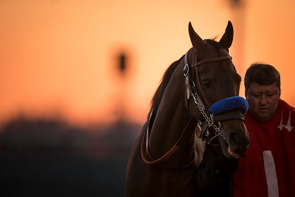 Game On Dude heading to the saddling paddock at Churchill Downs for the Clark Handicap on 11.29.2013