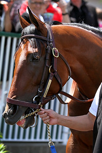 American Pharoah (Pioneerof the Nile) schools for the Kentucky Derby (Gr I) at Churchill Downs 4/29/15. Trainer: Bob Baffert. Owner: Zayat Stables