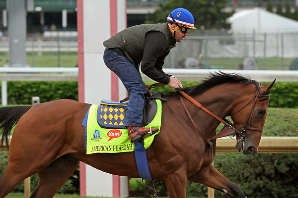 American Pharoah (Pioneerof the Nile) trains for the Kentucky Derby (Gr I) at Churchill Downs 4/30/15. Trainer: Bob Baffert. Owner: Zayat Stables