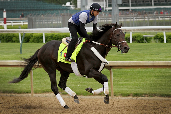 Bolo (Temple City) trains for the Kentucky Derby (Gr I) at Churchill Downs 4/30/15. Trainer: Carla Gaines. Owner: Golden Pegasus Racing Inc.