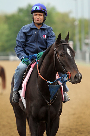 Condo Commando (Tiz Wonderful) trains for the Kentucky Oaks (Gr I) at Churchill Downs 4/30/15. Trainer: Rudy Rodriguez. Owner: Michael Dubb