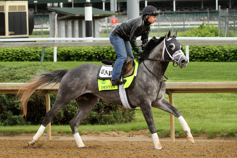 Destin (Giant's Causeway) trains for the Kentucky Derby (Gr I) at Churchill Downs 5/5/16. Trainer: Todd Pletcher. Owner: Eclipse Thoroughbred Partners & Twin Creeks Racing Stables, LLC