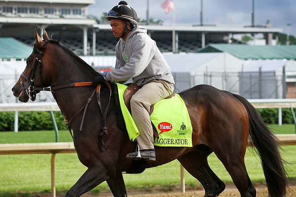 Exaggerator (Curlin) trains for the Kentucky Derby (Gr I) at Churchill Downs 5/5/16. Trainer: Keith Desormeaux. Owner: Big Chief Racing LLC