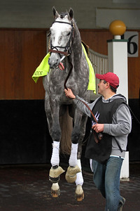 Creator (Tapit) schools for the Kentucky Derby (Gr I) at Churchill Downs 5/4/16. Trainer: Steve Asmussen. Owner: WinStar Farm LLC