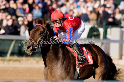 Bullsbay 11.28.2008 ( Horse Racing Photos by EquiSport Photos )