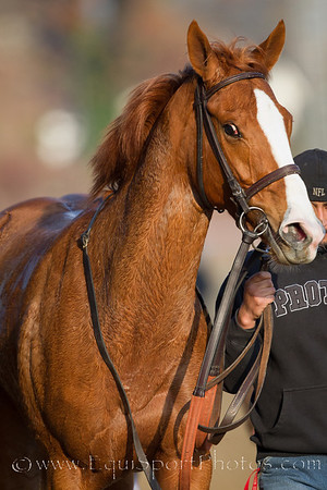 Bellaridge (Cactus Ridge) Tony Farina up, wins a 2 yr old filliies allowance at Churchill Downs 11.27.2010