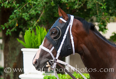 Gilbert Campbell's Two T's At Two B won the Dr Fager Stakes, the first of Calder's Stallion Series for two year olds. He is trained by Kathleen O'Connell and was ridden by jockey Eduardo Nunez. The bay colt was bred in Florida by his owner.