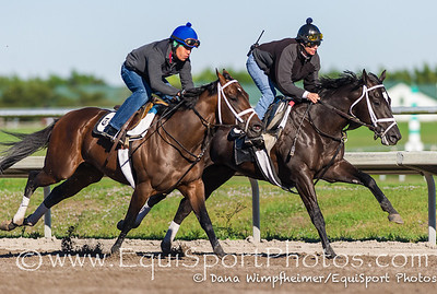 Two year old champion, Shanghai Bobby, worked 2.17.13 at Palm Meadows for trainer Todd Pletcher. He went on the inside of stablemate, Forty Tales.