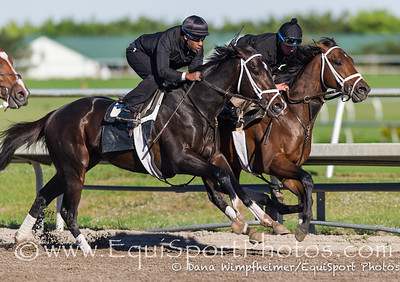 Violence, in this final prep for the Fountain of Youth, 2.17.13 at Palm Meadows. He is on the outside of stablemate Palace Mamilce.
