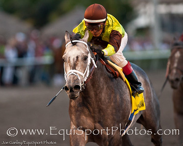 Graydar  (Unbridled's Song) with Edgar Prado up wins The Donn at Gulfstream Park (G1). Owner: Twin Creeks Racing Stable. Trainer: Todd Pletcher