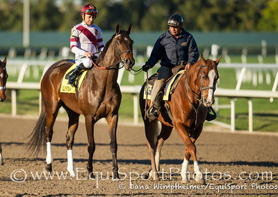 Royal Delta dominated the Grade III Sabin Stakes at Gulfstream 2.17.13. She is trained by Bill Mott, owned by Besilu Stables, LLC, and was ridden by jockey Mike Smith.